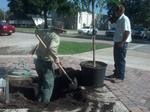 Wildwood Arbor Day
