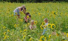 "<div class=""source"">BRENDA LOCKLEAR</div><div class=""image-desc"">BRENDA LOCKLEAR/Sumter County Times  The Lancaster family is playing host to dozens of people from around Sumter County and throughout Central Florida, as folks flock to their sunflower field for photo opportunities. Erin Forrester (standing) and Rachel Krausmann brought the Krausman children over from Orlando, just to capture some unique moments. The women are members of a photo club. The children, Adalyn, Finley and Kensley (not shown) were perfect subjects for a day in the sunflower field. The field will be open as long as it lasts. Visitors can purchase sunflowers for .50 cents each and can spend two hours taking photos in the field for $35. The Lancasters also have fresh produce available. To make arrangements to visit the patch in Center Hill, call 352-303-3504. See next week's edition of the Sumter County Times for a photo page and story on the family patch.      </div><div class=""buy-pic""><a href=""/photo_select/20746"">Buy this photo</a></div>"