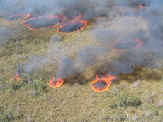 "<div class=""source"">FWC</div><div class=""image-desc""> CUTLINES:  On large-acreage tracts of land, helicopters are used for prescribed burns.       </div><div class=""buy-pic""></div>"